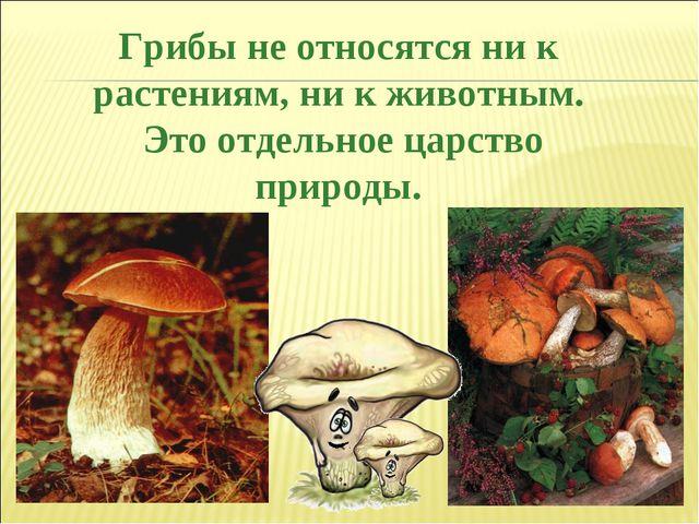 Грибы не относятся ни к растениям, ни к животным. Это отдельное царство приро...