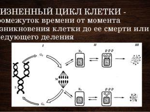 ЖИЗНЕННЫЙ ЦИКЛ КЛЕТКИ - промежуток времени от момента возникновения клетки до