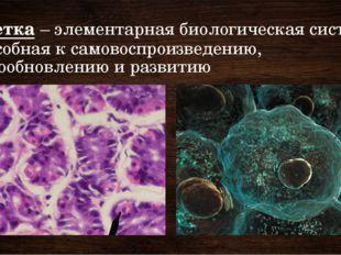 Клетка – элементарная биологическая система, способная к самовоспроизведению,