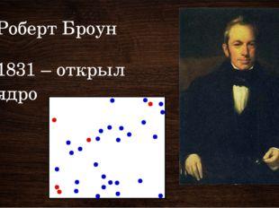 Роберт Броун 1831 – открыл ядро 1831 – англ ботаник Броун открыл ядро клетки.