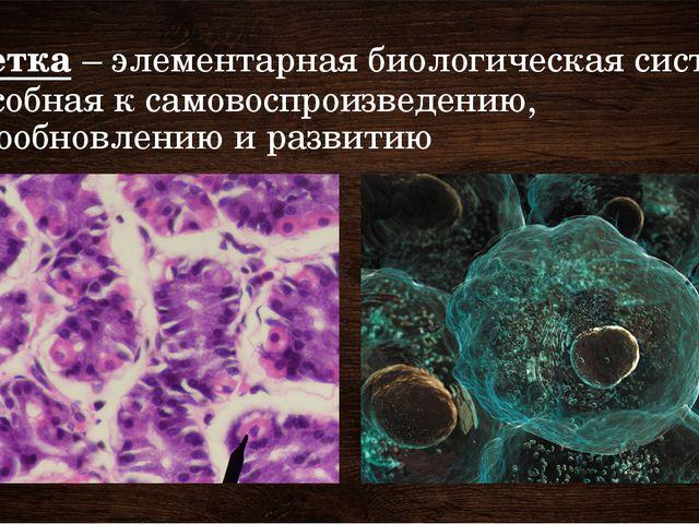 Клетка – элементарная биологическая система, способная к самовоспроизведению,...