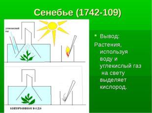 Сенебье (1742-109) Вывод: Растения, используя воду и углекислый газ на свету