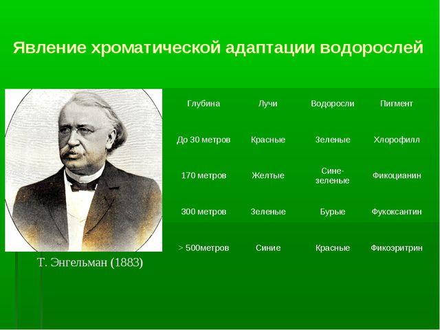 Явление хроматической адаптации водорослей Т. Энгельман (1883) ГлубинаЛучиВ...