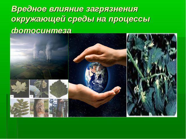 Вредное влияние загрязнения окружающей среды на процессы фотосинтеза