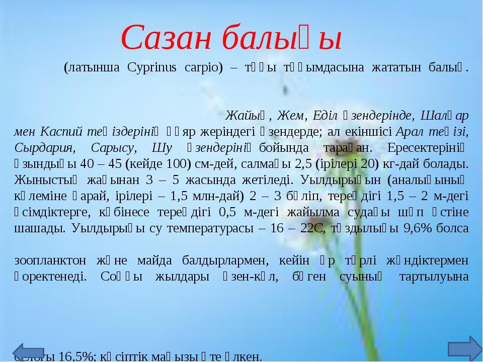 Сазан балығы Саза́н (латынша Cyprinus carpio) – тұқы тұқымдасына жататын бал...