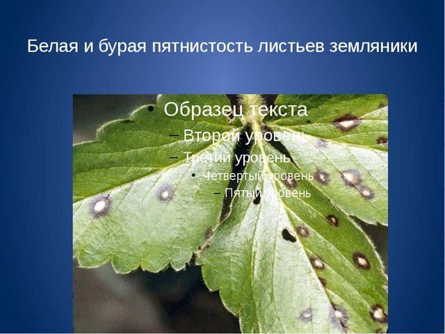 Белая и бурая пятнистость листьев земляники