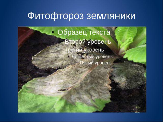 Фитофтороз земляники