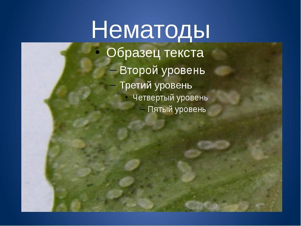 Нематоды