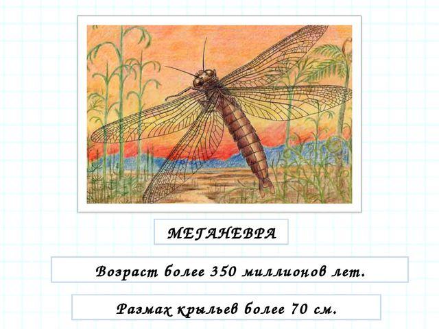 МЕГАНЕВРА Возраст более 350 миллионов лет. Размах крыльев более 70 см.