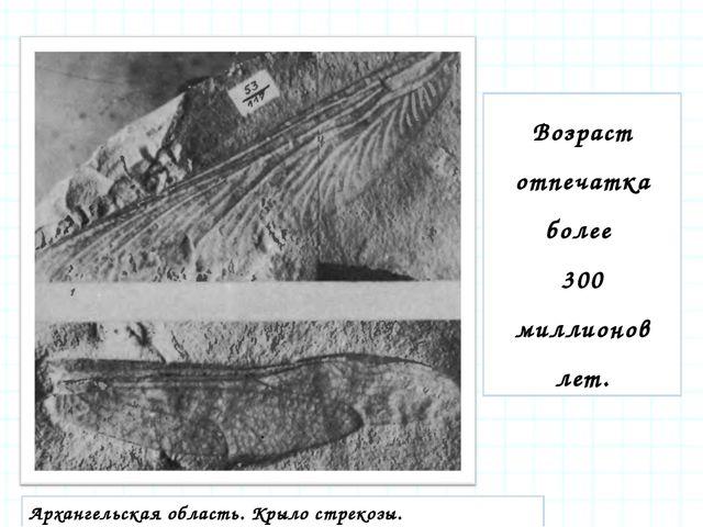 Возраст отпечатка более 300 миллионов лет. Архангельская область. Крыло стрек...