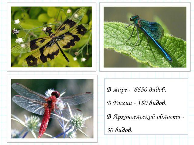 В мире - 6650 видов. В России - 150 видов. В Архангельской области - 30 видов.