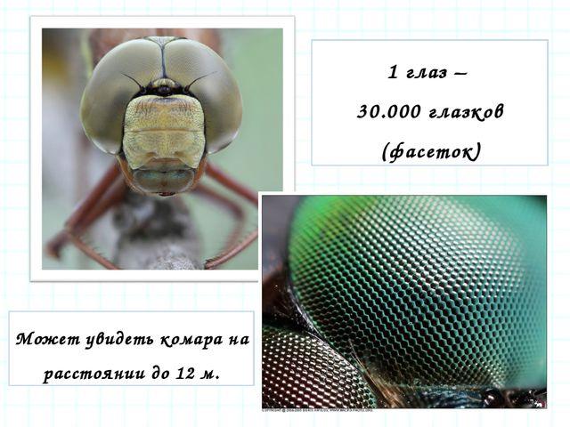 1 глаз – 30.000 глазков (фасеток) Может увидеть комара на расстоянии до 12 м.