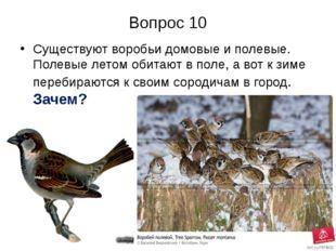 Вопрос 10 Существуют воробьи домовые и полевые. Полевые летом обитают в поле,