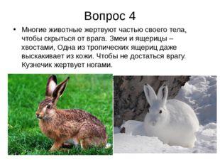 Вопрос 4 Многие животные жертвуют частью своего тела, чтобы скрыться от врага