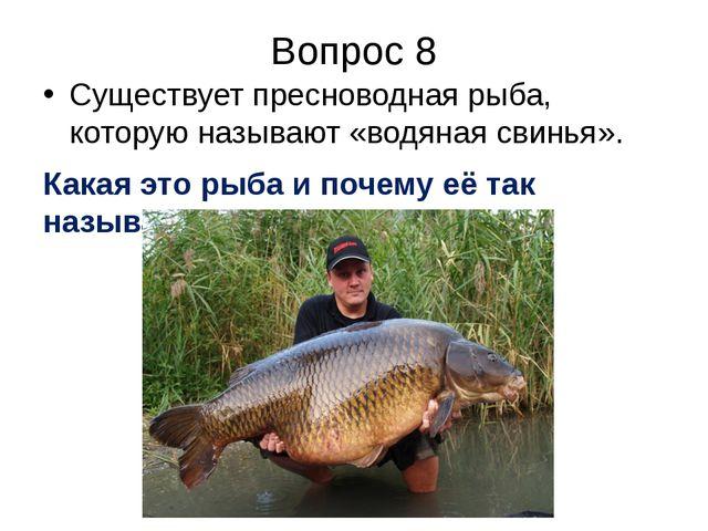 Вопрос 8 Существует пресноводная рыба, которую называют «водяная свинья». Как...