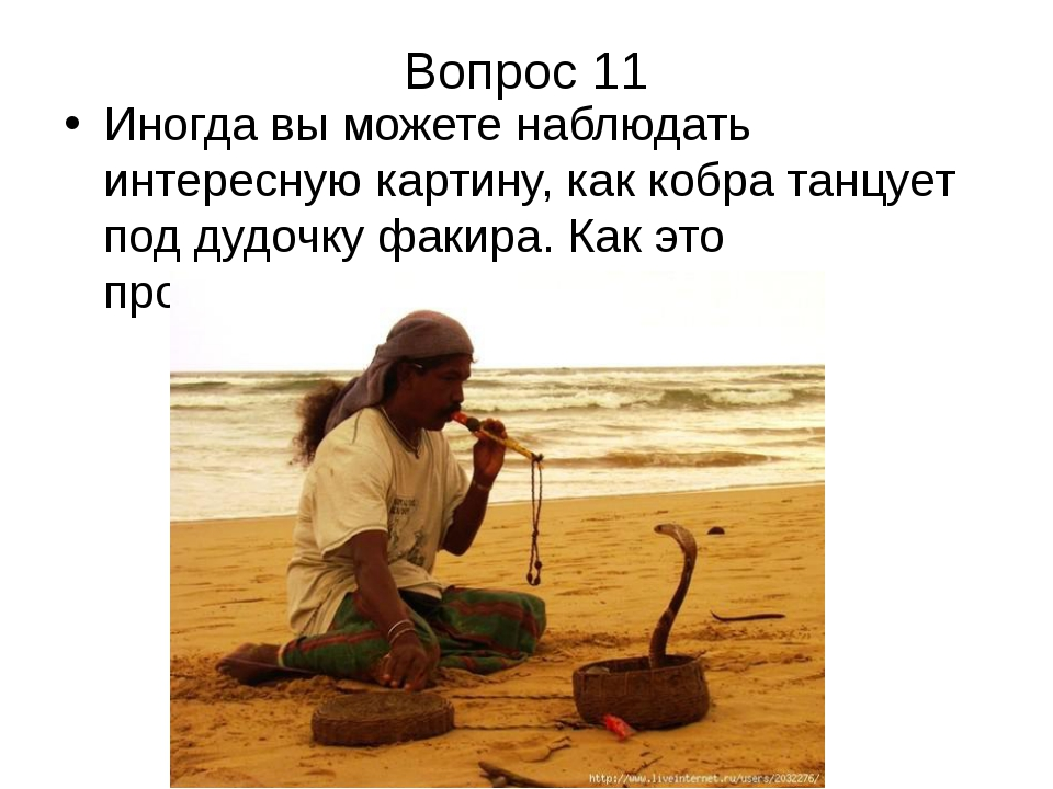 Вопрос 11 Иногда вы можете наблюдать интересную картину, как кобра танцует по...