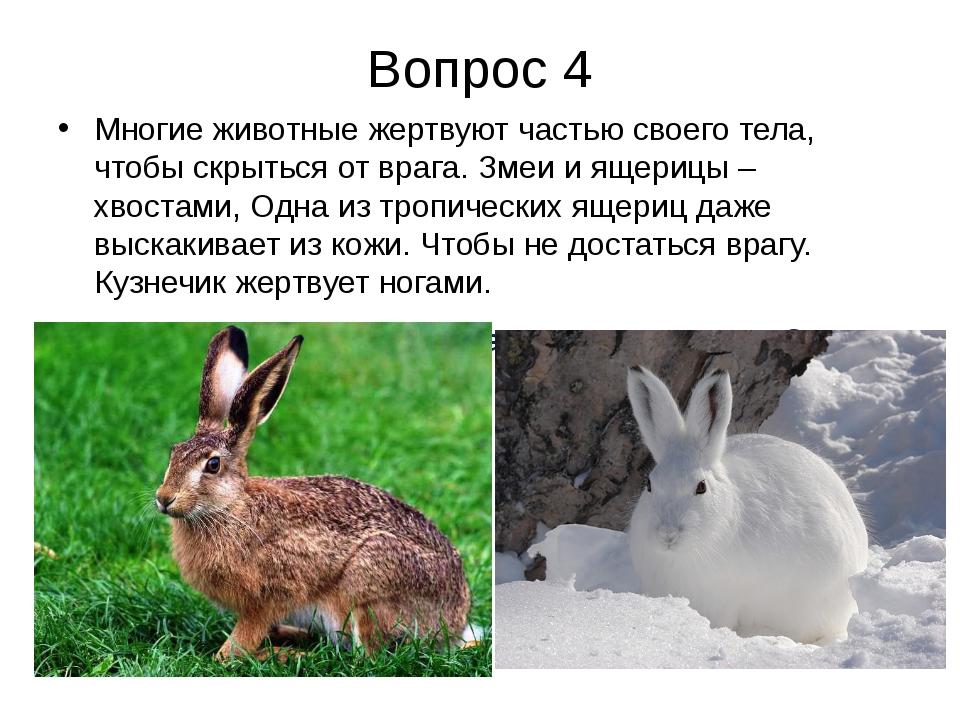Вопрос 4 Многие животные жертвуют частью своего тела, чтобы скрыться от врага...