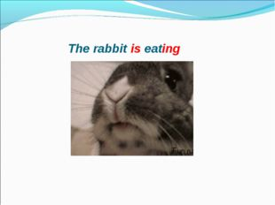 The rabbit is eating