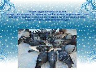 Птицам трудно приходится зимой. Нередко они голодают. Во время метелей и силь