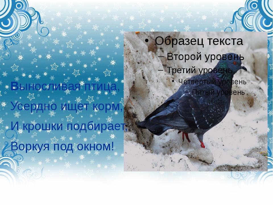 Выносливая птица, Усердно ищет корм, И крошки подбирает, Воркуя под окном!