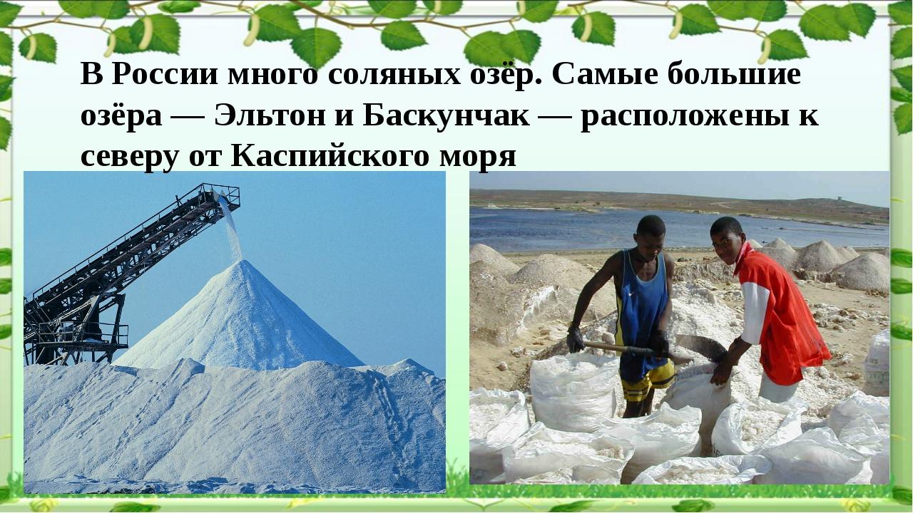 В России много соляных озёр. Самые большие озёра — Эльтон и Баскунчак — расп...