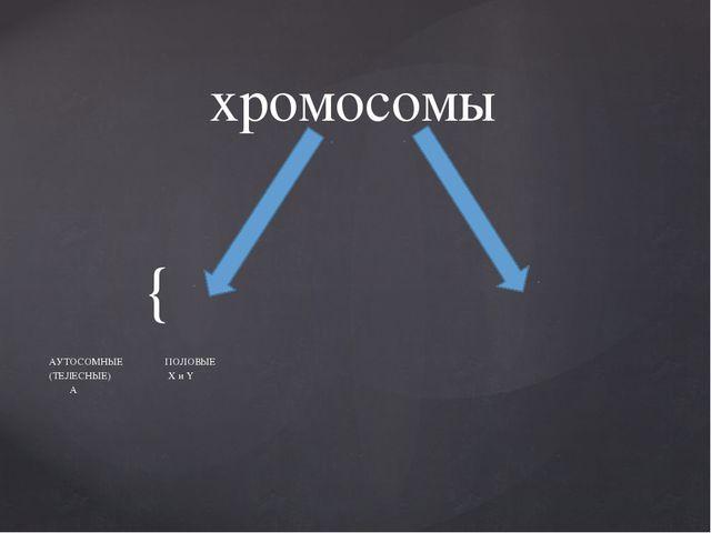 хромосомы АУТОСОМНЫЕ ПОЛОВЫЕ (ТЕЛЕСНЫЕ) X и Y А {