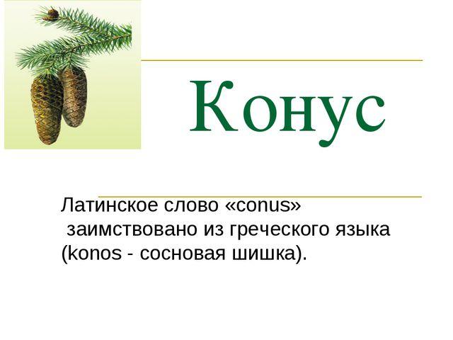 Конус Латинское слово «conus» заимствовано из греческого языка (konos - сосно...