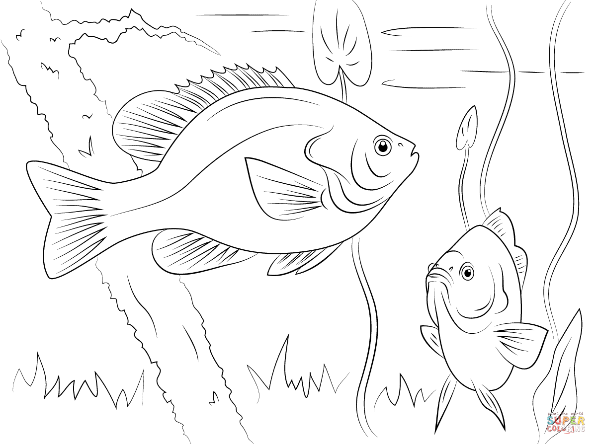 http://www.supercoloring.com/sites/default/files/styles/coloring_full/public/cif/2015/01/redear-sunfishes-coloring-pages.png
