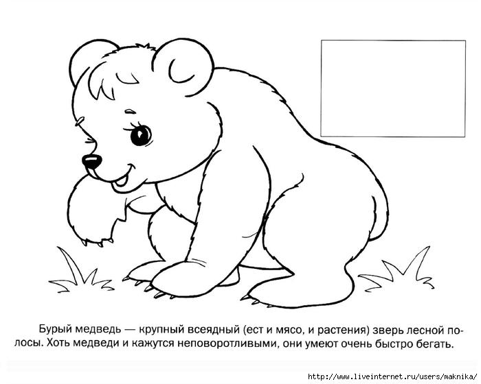 Животные картинки раскраска