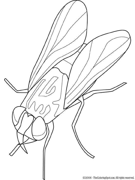 http://freecoloringpages.lightupyourbrain.com/wp-content/uploads/2011/05/housefly.jpg