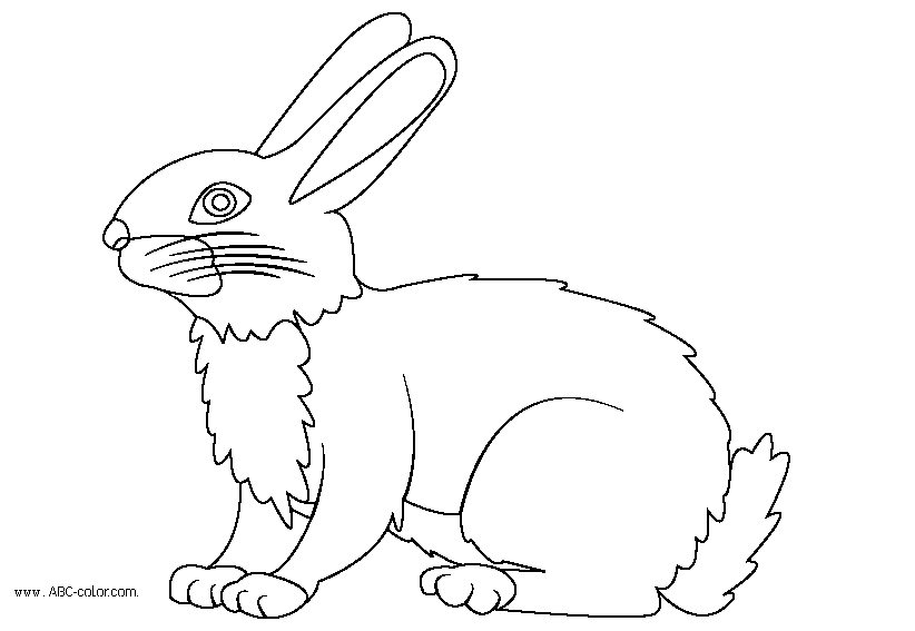 http://www.pics-zone.ru/img.php?url=http://www.abc-color.com/image/coloring/animals/001/hare/hare-raster-coloring.png