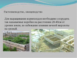 Растениеводство, овощеводство Для выращивания корнеплодов необходимо соорудит