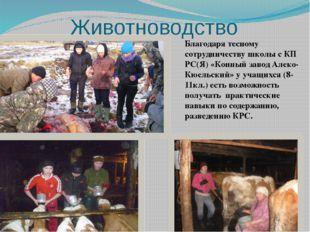 Животноводство Благодаря тесному сотрудничеству школы с КП РС(Я) «Конный заво