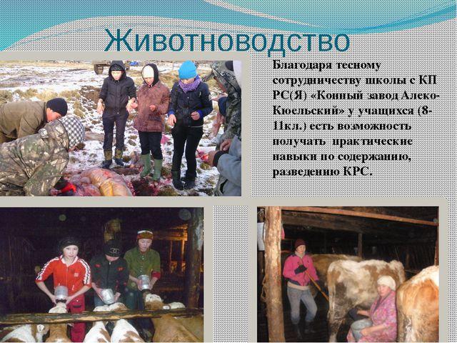 Животноводство Благодаря тесному сотрудничеству школы с КП РС(Я) «Конный заво...