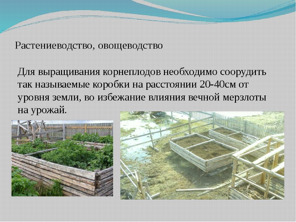 Растениеводство, овощеводство Для выращивания корнеплодов необходимо соорудит...
