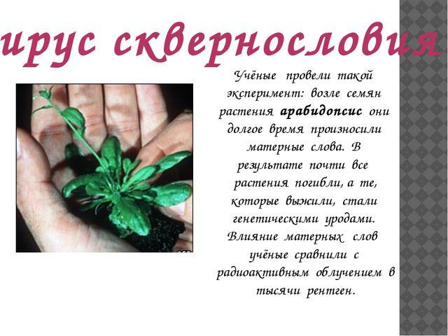 Вирус сквернословия Учёные провели такой эксперимент: возле семян растения ар...