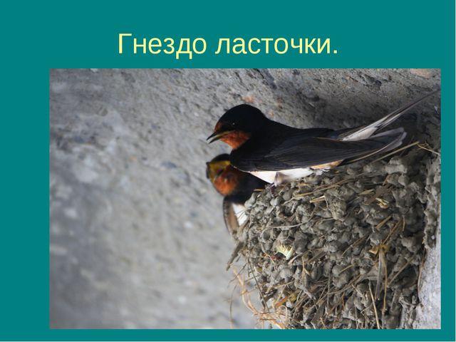 Гнездо ласточки.