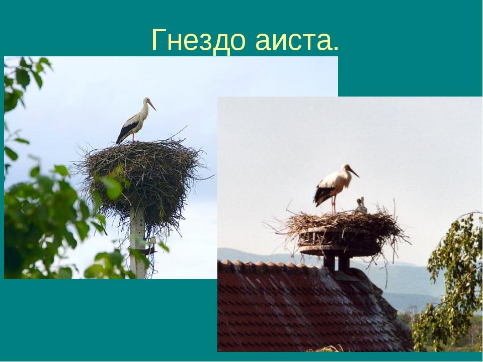 Гнездо аиста.