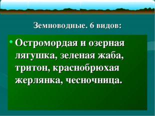Земноводные. 6 видов: Остромордая и озерная лягушка, зеленая жаба, тритон, к