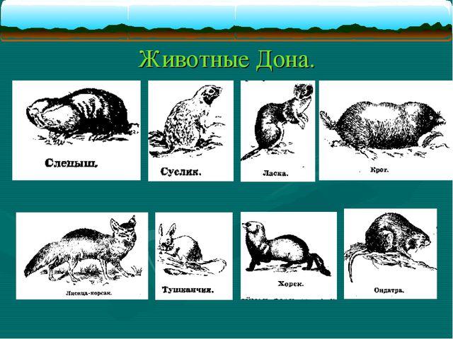 Животные Дона.