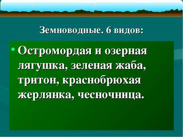 Земноводные. 6 видов: Остромордая и озерная лягушка, зеленая жаба, тритон, к...