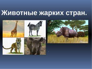 Животные жарких стран. .