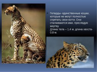 Гепарды- единственные кошки, которые не могут полностью спрятать свои когти.