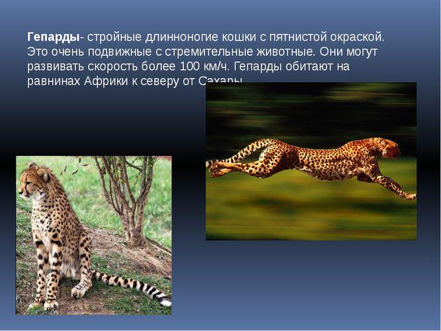 Гепарды- стройные длинноногие кошки с пятнистой окраской. Это очень подвижные...
