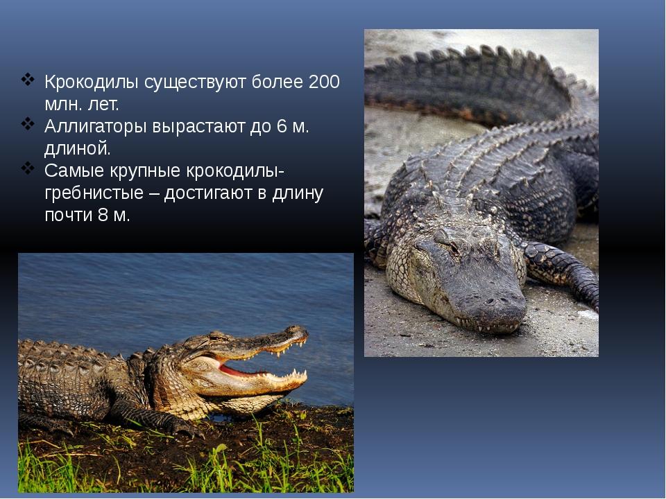 Крокодилы существуют более 200 млн. лет. Аллигаторы вырастают до 6 м. длиной....