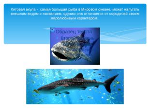 Китовая акула - самая большая рыба в Мировом океане, может напугать внешним в