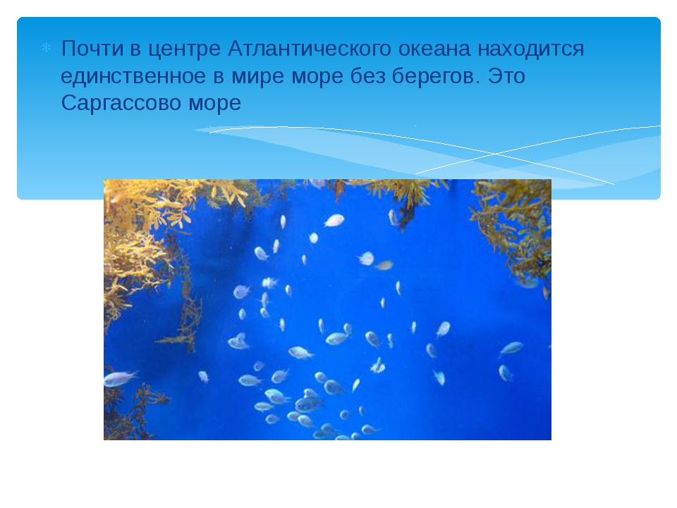 Почти в центре Атлантического океана находится единственное в мире море без б...