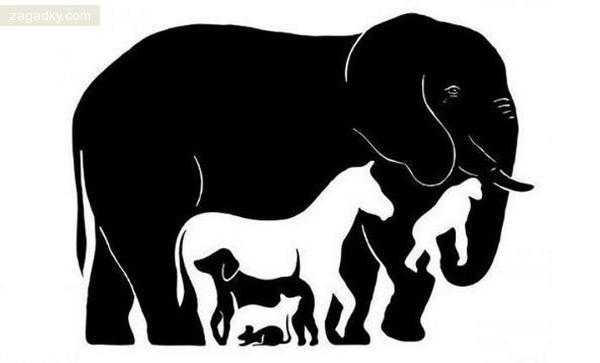 Загадки в картинках: Сколько животных вы видите на картинке?