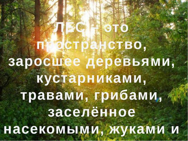 ЛЕС – это пространство, заросшее деревьями, кустарниками, травами, грибами,...