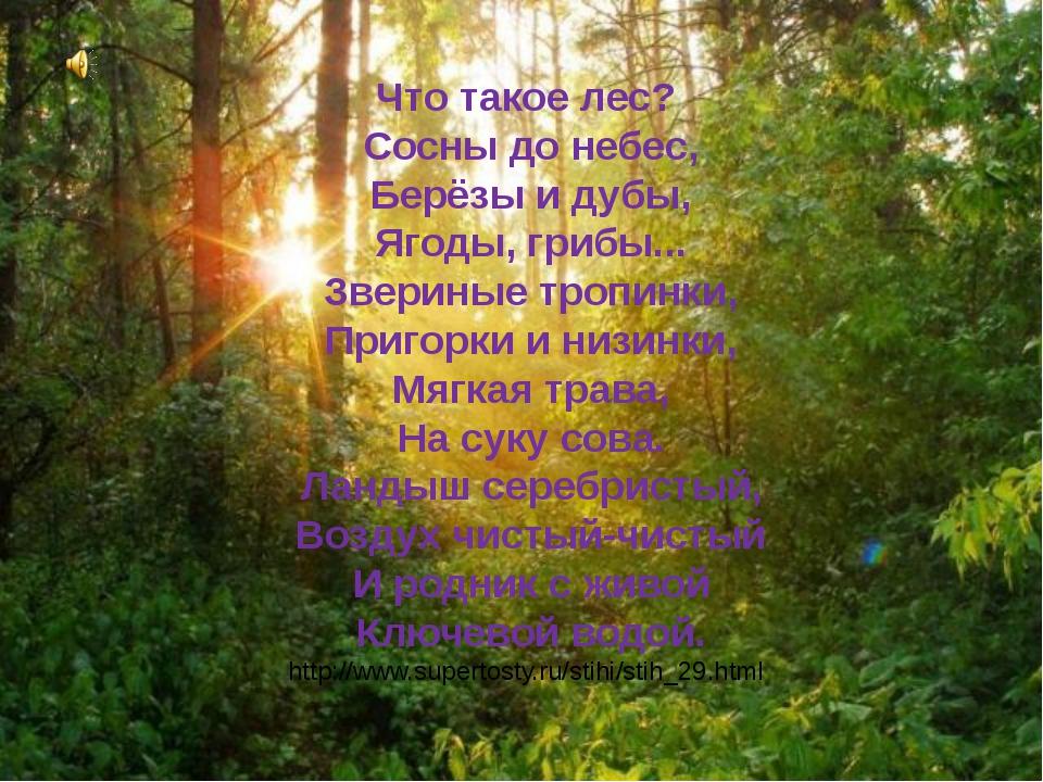 Что такое лес? Сосны до небес, Берёзы и дубы, Ягоды, грибы... Звериные тропин...